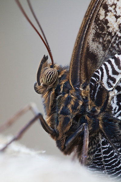 OWL BUTTERFLY NATURAL LIGHT STACK 2012 #2