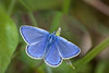 COMMON BLUE 2011