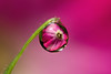 DEWDROP REFRACTION  #93