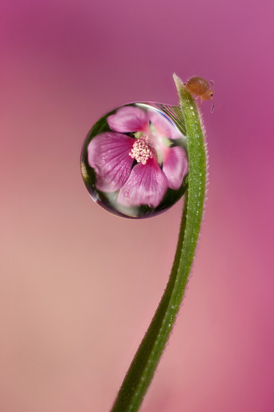 Dewdrop Refractions