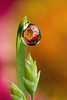 DEWDROP REFRACTION  #72