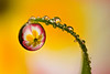 DEWDROP REFRACTION  #34
