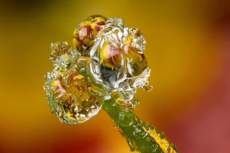FROZEN DEWDROP  #40