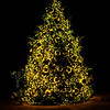 Kendralla Photography_Christmas_Tree-OMD12434