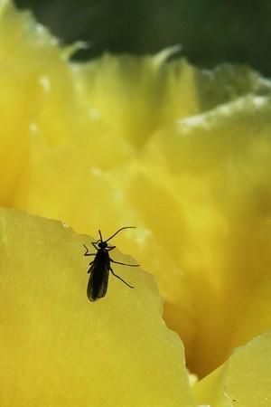 Yellow cactus in Boise