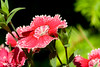 FavoriteMacroFlowers-1