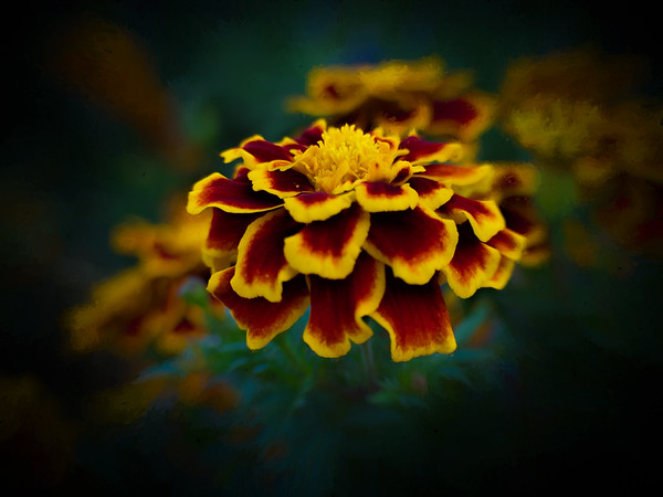 Kendralla PhotographyYellowPaintedFlower-OMD13280-Edit