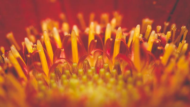 IMAGE: https://photos.smugmug.com/Macro/Flowers/i-Pj7V8Qh/0/863804aa/L/IMG_3159-L.jpg