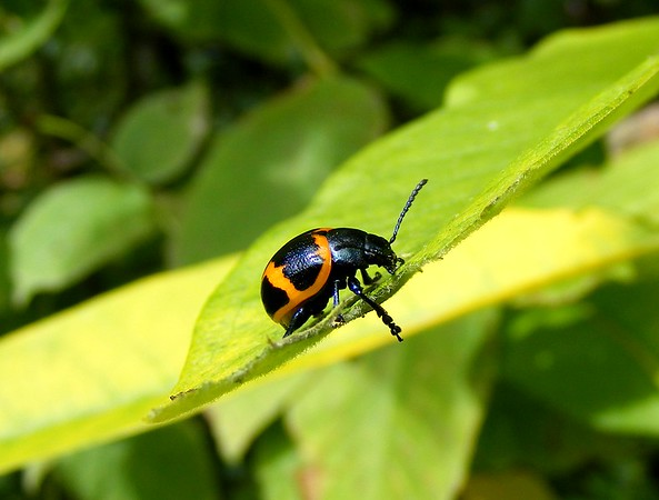 Snails, Beetles , and More
