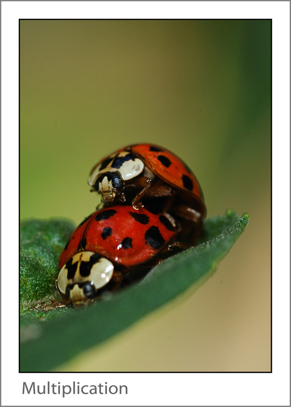 Insects and other critters