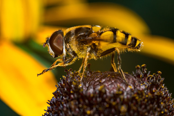 Hoverfly Plotting