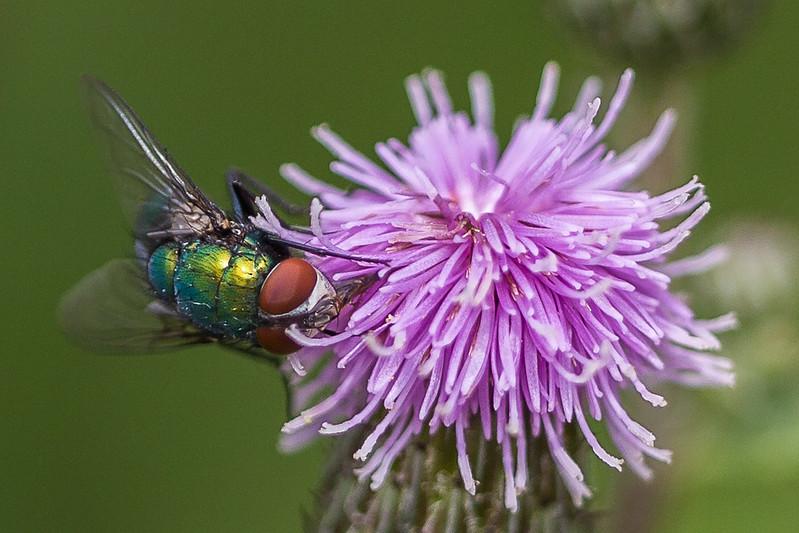 Fly - Flue