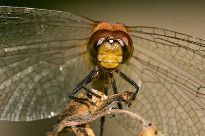 A Happy Dragonfly