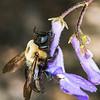 The Heavy Bumblebee