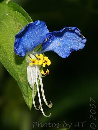 Macro Flowers