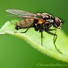Hairy Fly <br /> - when you get them close up you sometimes happen to see things your dont really need to see...