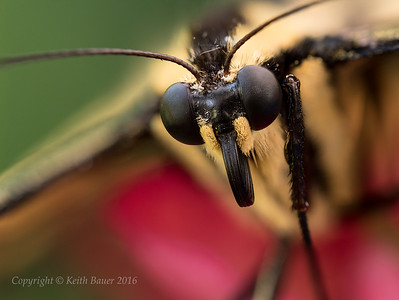Macro and Close Up Photography