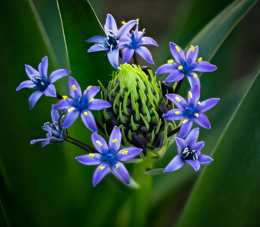 Blue Flower 28