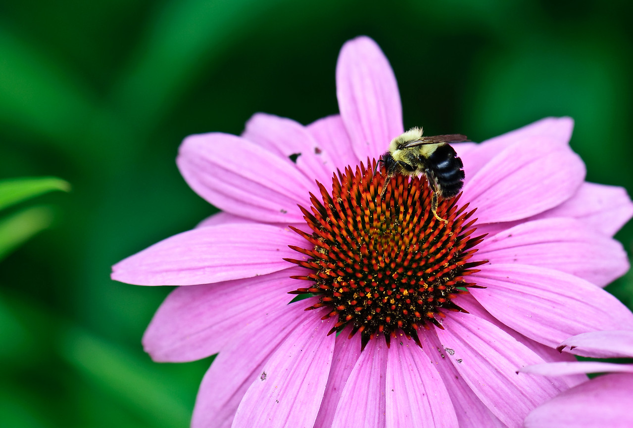 Spreading Pollen