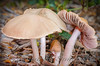 Mushrooms-3-w-bugshadow-v5_12x18_8068-4print