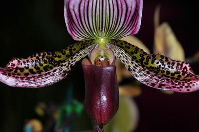 Orchids 3-21-10