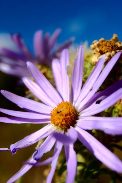 Flower and plant Closeup/Macros #2