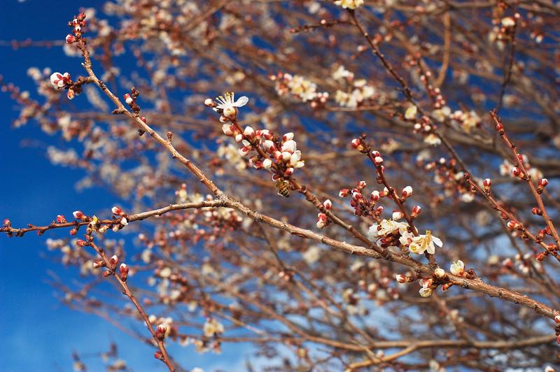 Bees 'n Flowers in February