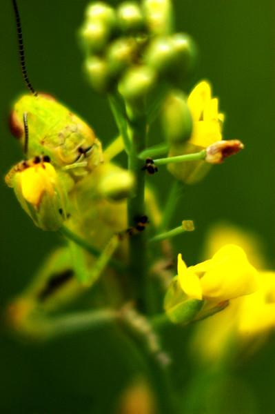 Green 'n Yellow