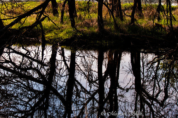 Reflections: Ridgefield Wildlife Refuge, Ridgefield, WA