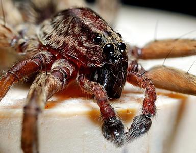 Spider on Cork
