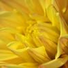 Sunshine bright floral