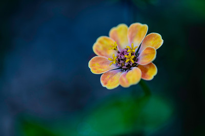 going solo, macro flower photography