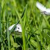 sommerfugl ps-022