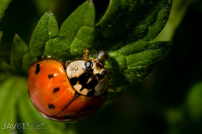 Lady bug snack time