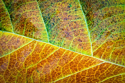 autumn in macro