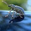 Cool Looking Bug!