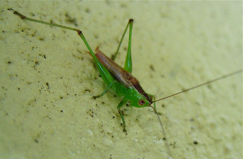 Grasshopper....best viewed at XL