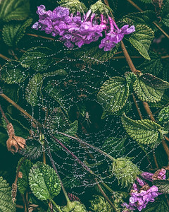 Spider in the MIst