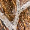 Ice-covered Ivy Vine on Tree