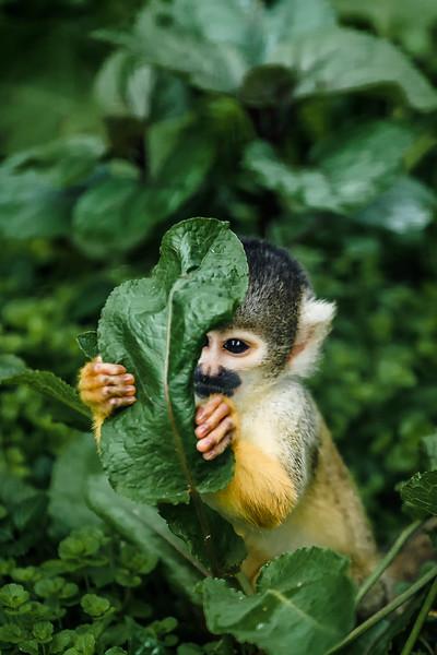 Shy little monkey