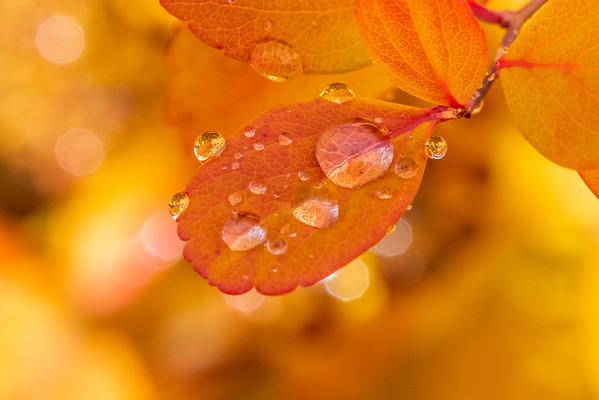 Fall Rains