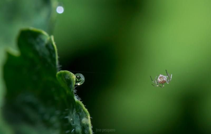 Spider planet