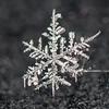 Snowflake 1/5/17