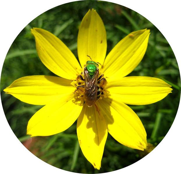 Green Hornet best viewed x2