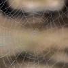 Dew on a Spiderweb 9/28/16