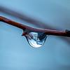 Rain Drop 1/2/17