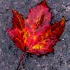 Autumn Colors 10/13/16