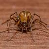 Spider 2/8/17