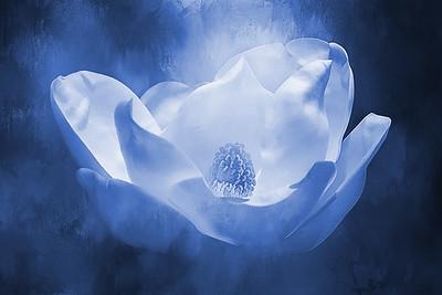 Icy Magnolia