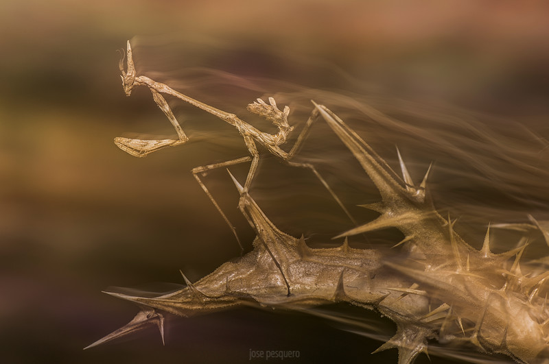 Honor Mention - Montphoto<br /> Honor Mention - Alejo Leal Photo Contest